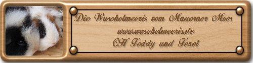 Kleine Hobbyzucht von  Ch Teddy und Texel in slate-blue und schoko-kunterbunt.